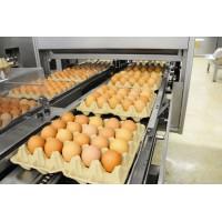 Яйцо под брендом «Коми кольк»